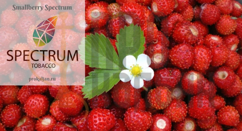 Smallberry Spectrum