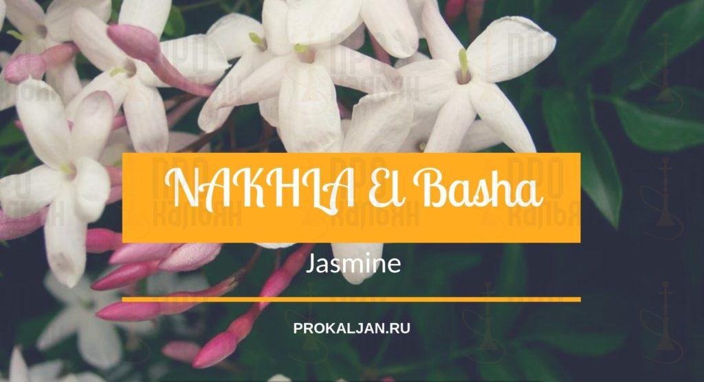 NAKHLA El Basha Jasmine