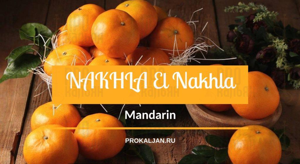 NAKHLA El Nakhla Mandarin