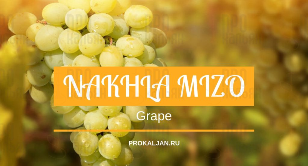 NAKHLA MIZO Grape